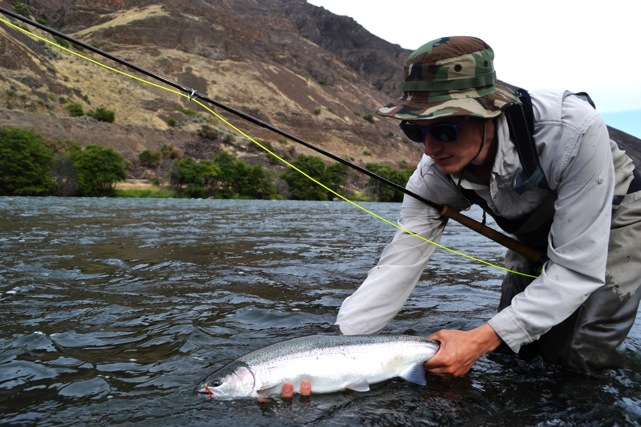 Late summer and fall steelhead report renton 39 s river for Deschutes river fishing report